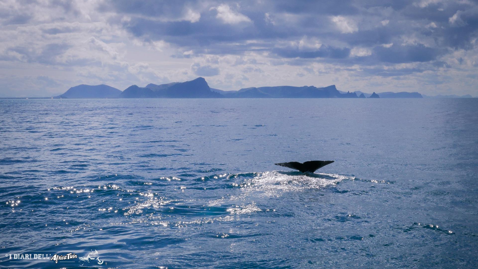 whaleshunter capodogli norvegia