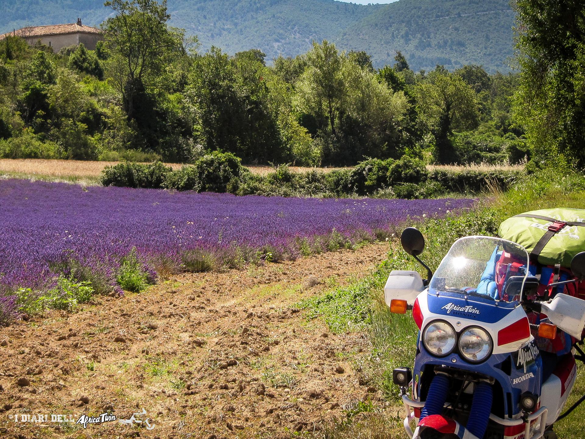 Provenza, Francia. La strada della lavanda