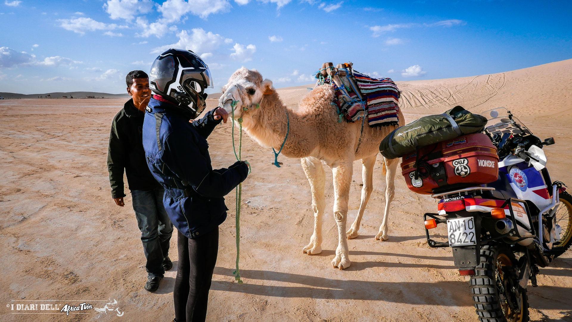 dromedario deserto tunisia Ong Jmal