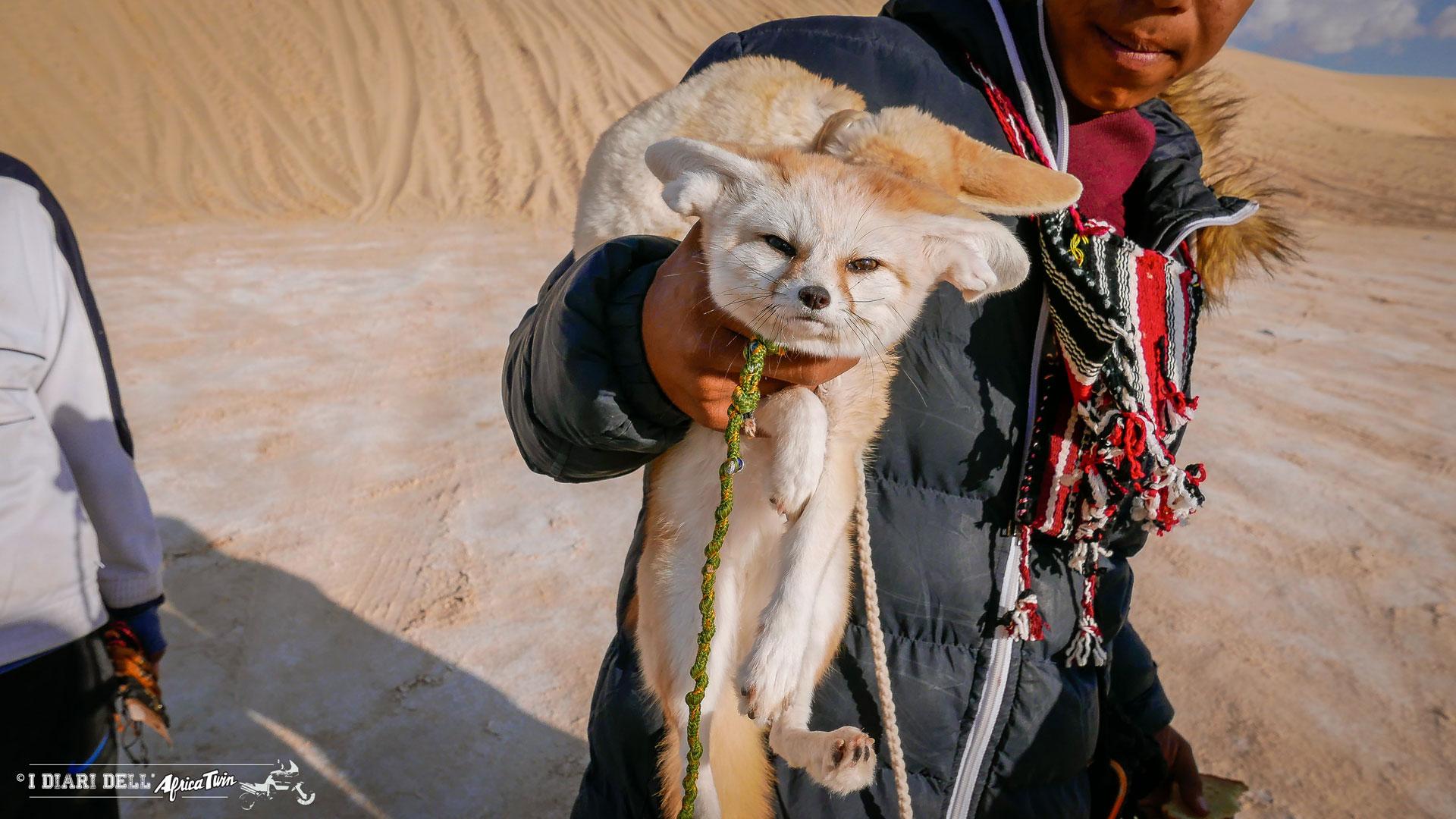volpe del deserto tunisia